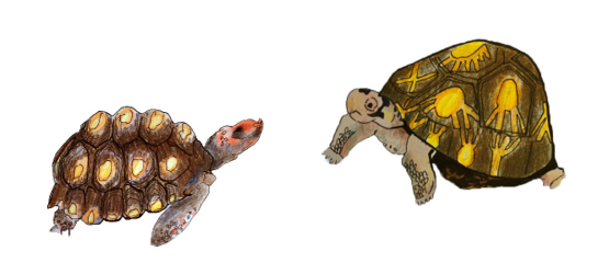 Two tortoises. One is small and has a red face, while the other is taller and has a large, domed shell with a yellow pattern on it.