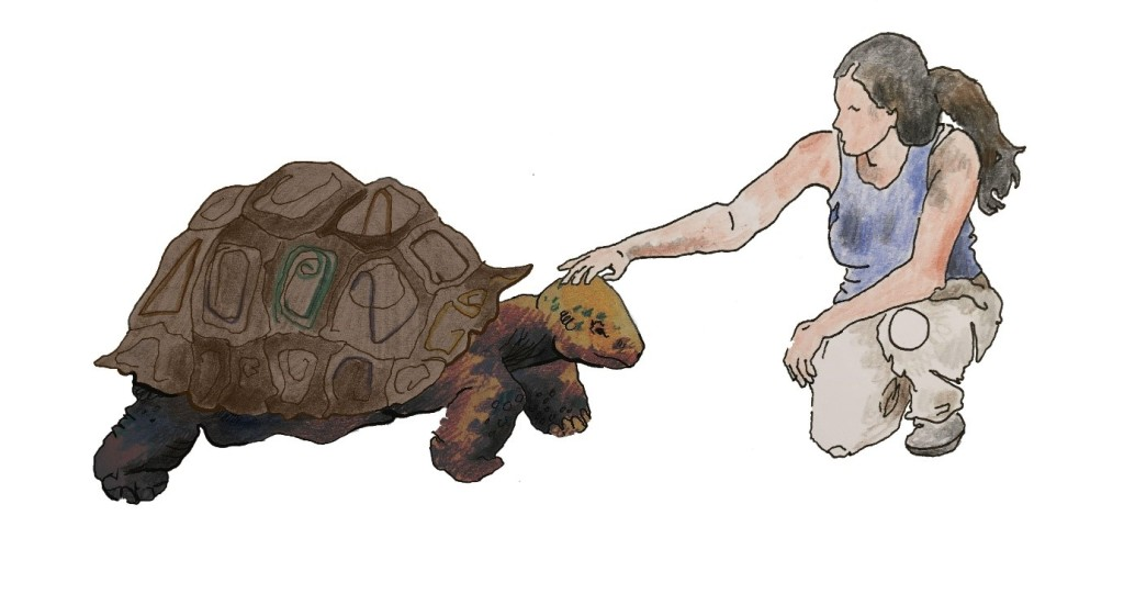 Tamar is knelt down beside a large tortoise - Timmy. She is stroking his head with one hand, and he looks content.