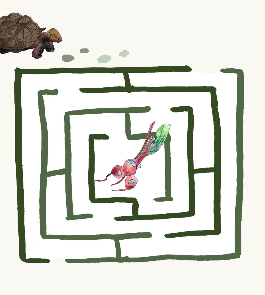 A labyrinth-style maze, with Timmy waiting outside it and a handful of tasty beetroots waiting in the centre.