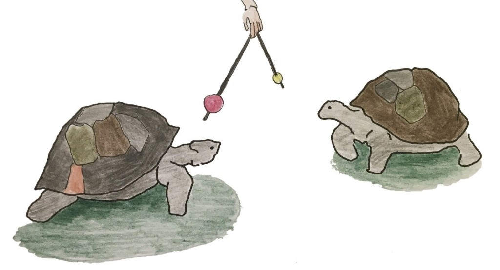 Two other tortoises approach two different balls on sticks. One has a red ball; the other, a yellow ball.