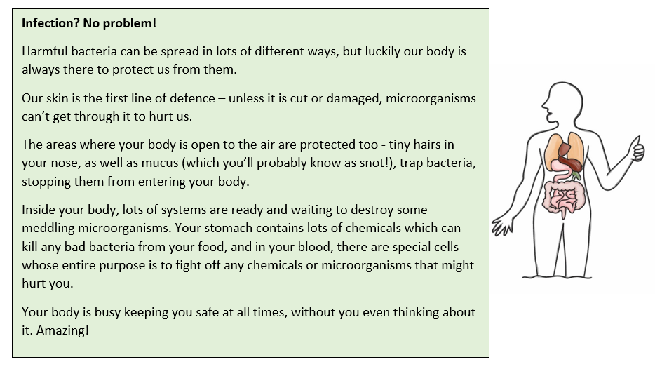 A text box. It reads: Infection? No problem! Harmful bacteria can be spread in lots of different ways, but luckily our body is always there to protect us from them.  Our skin is the first line of defence – unless it is cut or damaged, microorganisms can't get through it to hurt us.  The areas where your body is open to the air are protected too - tiny hairs in your nose, as well as mucus (which you'll probably know as snot!), trap bacteria, stopping them from entering your body. Inside your body, lots of systems are ready and waiting to destroy some meddling microorganisms. Your stomach contains lots of chemicals which can kill any bad bacteria from your food, and in your blood, there are special cells whose entire purpose is to fight off any chemicals or microorganisms that might hurt you.  Your body is busy keeping you safe at all times, without you even thinking about it. Amazing! There is also a drawing to the right. It shows an outline of the human body and the organs of the digestive system within it, including the stomach and intestines.