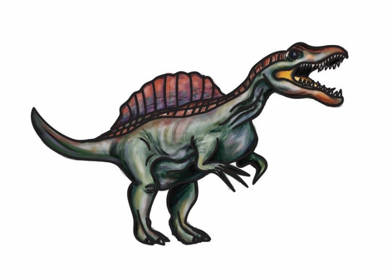 An illustration of Spinosaurus. It has a large head with a strong jaw, and a mouth full of teeth that is open in a roar. Along its back rises a huge fan, that looks like a crest. Its body is bulky. It has two powerful hind legs, and two slightly smaller front legs, which are tipped with three long fingers on each hand.