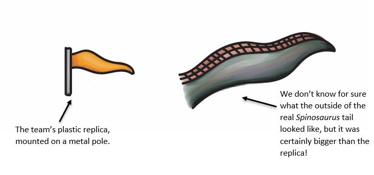 A drawing of the small, plastic, yellow replica, attached to a metal pole, alongside an illustration of the real Spinosaurus tail. The 'real' tail is much bigger.